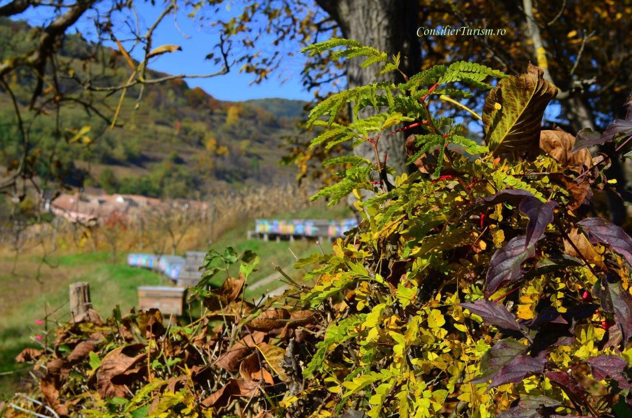 biertan autumn