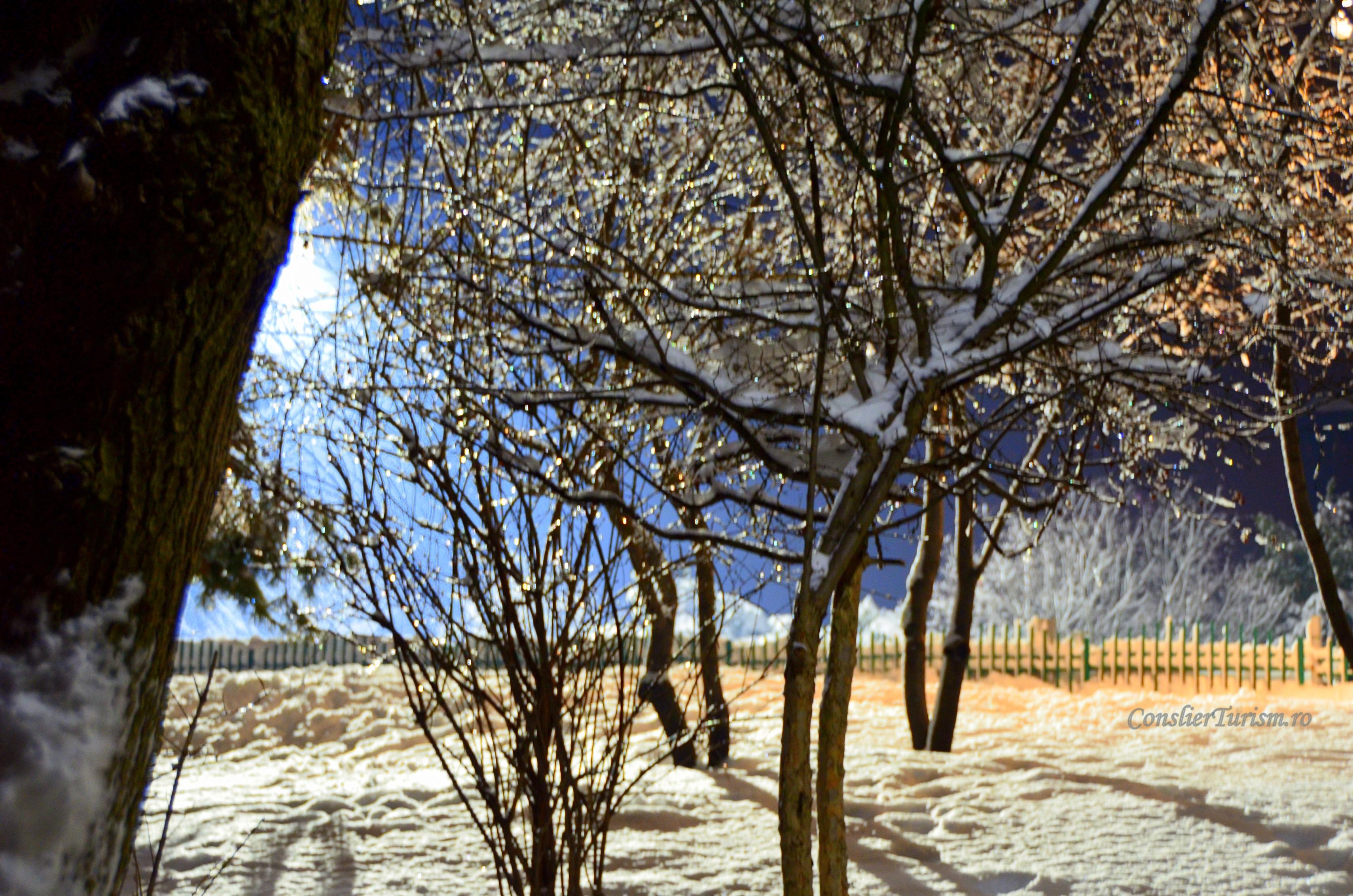 arbori de gheata