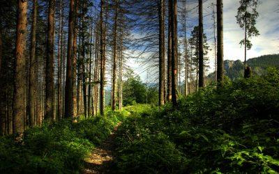 """""""ReMarking Romania"""" – cel mai mare proiect de remarcare a traseelor montane din România"""