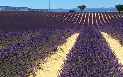 În Provence, pe drumurile lavandei