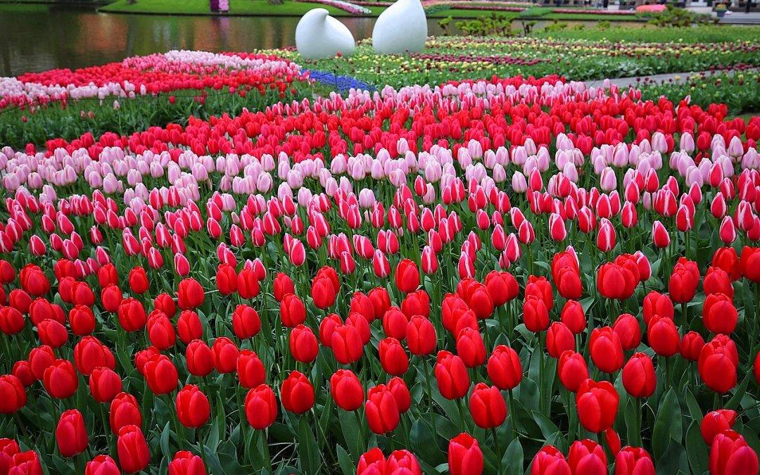 Top 10 cele mai frumoase festivaluri și sărbători ale florilor din Europa