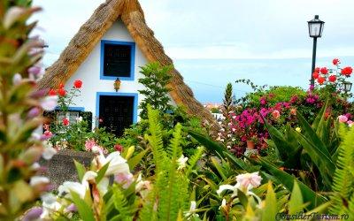 Despre Madeira, Grădina plutitoare a Atlanticului, și florile sale