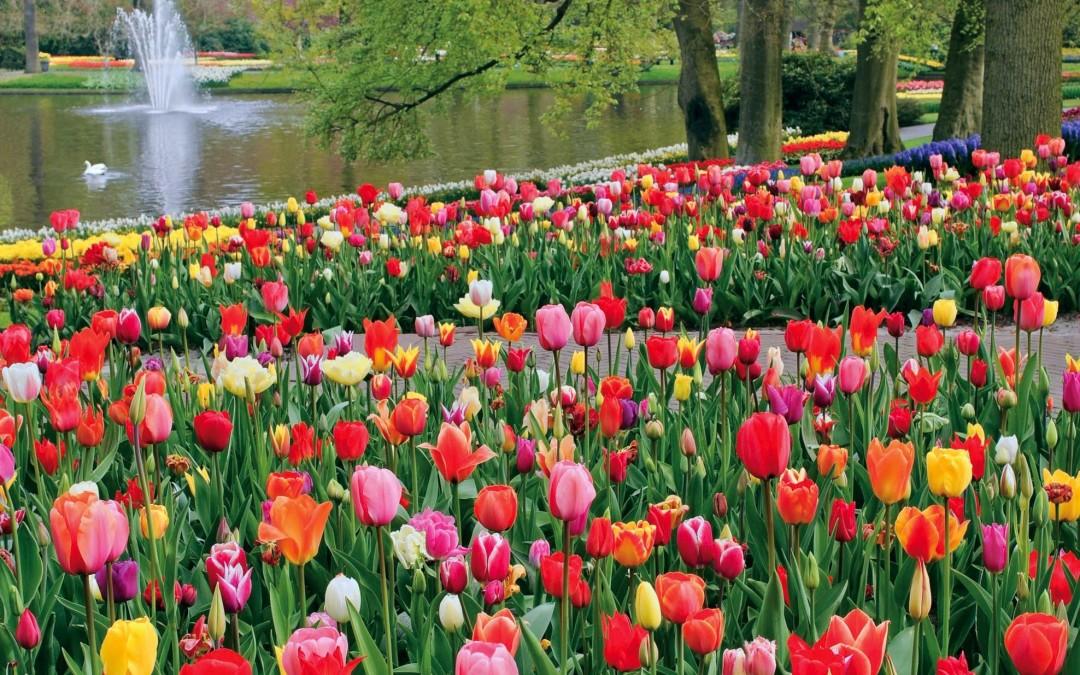 Un oras si mai multe posibilitati de distractie: Amsterdam, destinatia perfecta pentru weekend plin